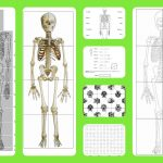 Free Printable Life Sized Child And Adult Skeletons, Skull Puzzles   Printable Skeleton Puzzle