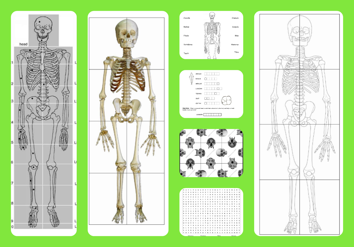 Free Printable Life-Sized Child And Adult Skeletons, Skull Puzzles - Printable Skeleton Puzzle