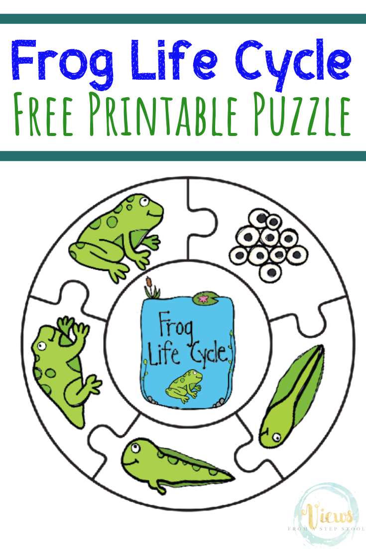 Frog Life Cycle Printable Puzzle - Views From A Step Stool - Printable Frog Puzzle