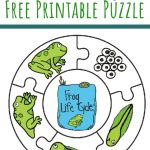 Frog Life Cycle Printable Puzzle   Views From A Step Stool   Printable Puzzle For Toddlers