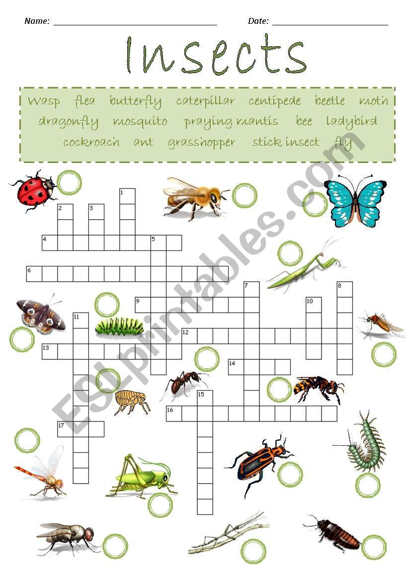 Insects Crossword Puzzle - Esl Worksheetjoeyb1 - Insect Crossword Puzzle Printable