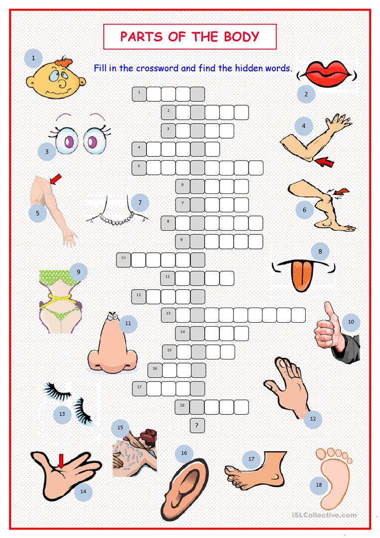 Parts Of The Body Crossword Worksheet - Free Esl Printable - Printable Body Puzzle