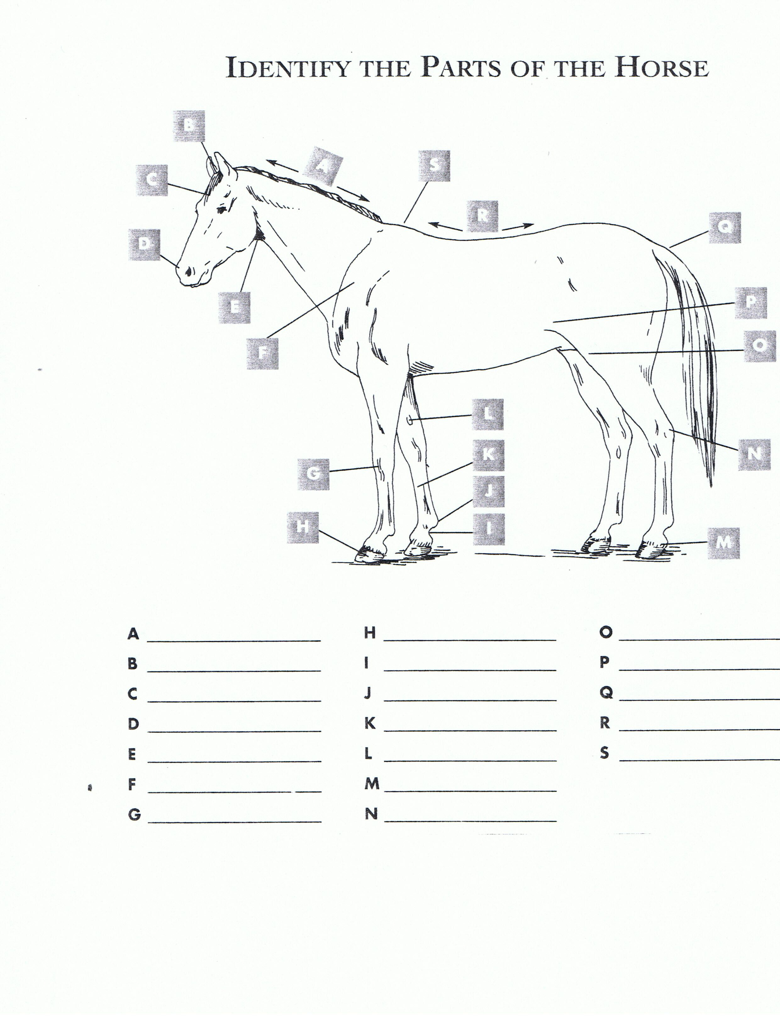 Pincindy Dillingham On Homeschool Highschool | Horses, Horseback - Printable Horse Puzzle