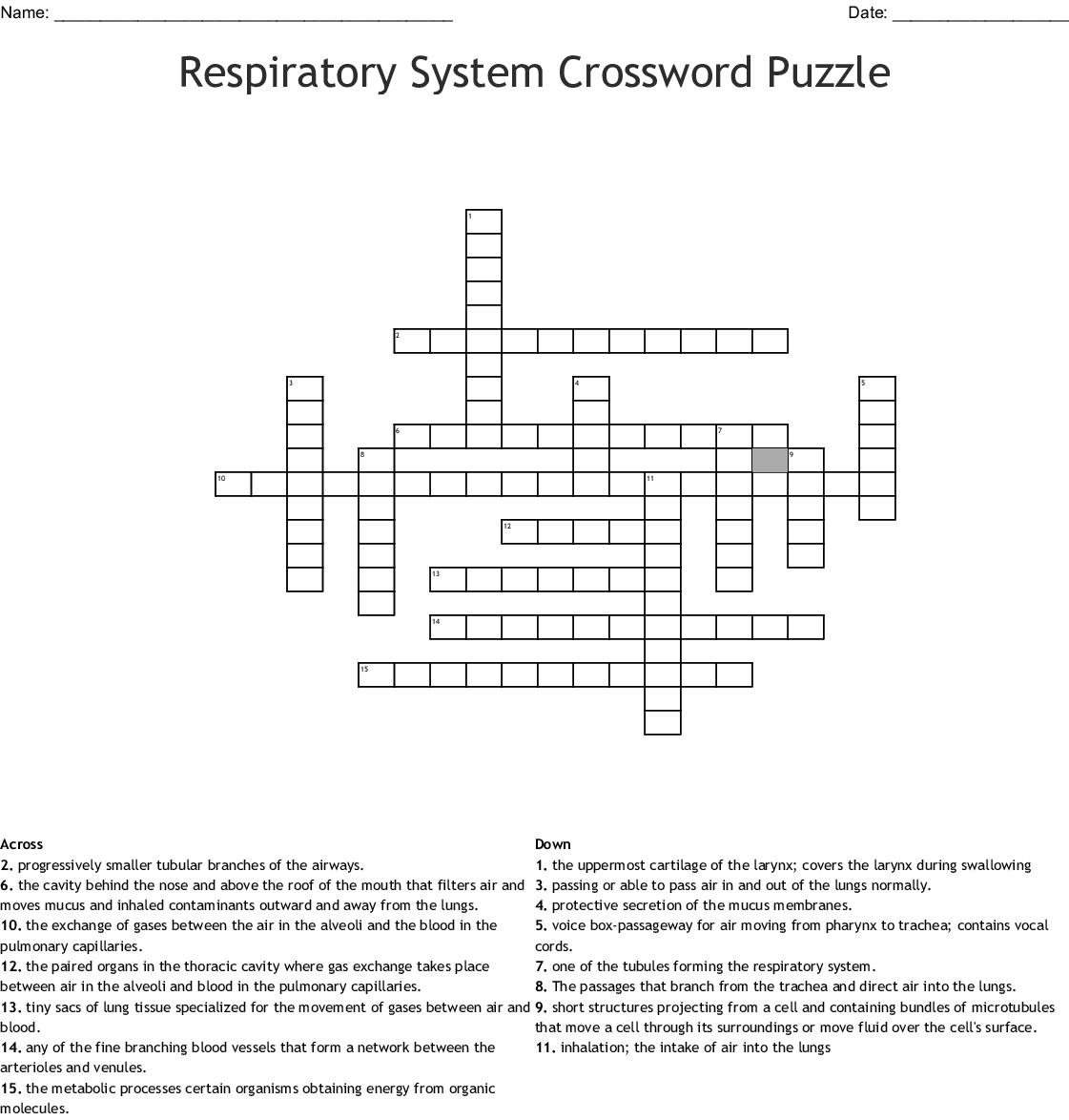 Respiratory System Crossword Puzzle Crossword - Wordmint - Respiratory System Crossword Puzzle Printable