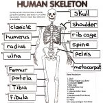 Skeletal System Crossword Puzzle Answers | Healthy Hesongbai   Printable Skeletal System Crossword Puzzle