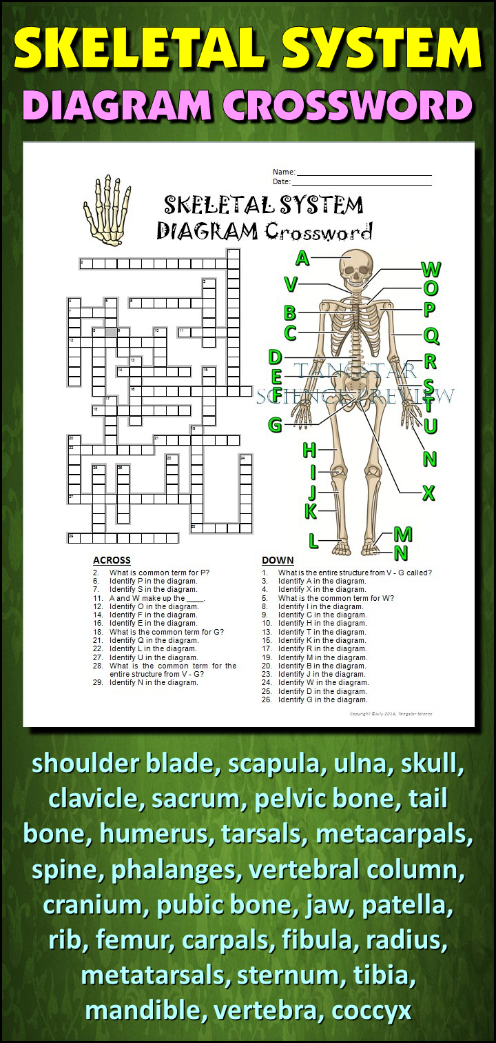 Skeletal System Crossword With Diagram {Editable} | Tpt Science - Printable Skeletal System Crossword Puzzle