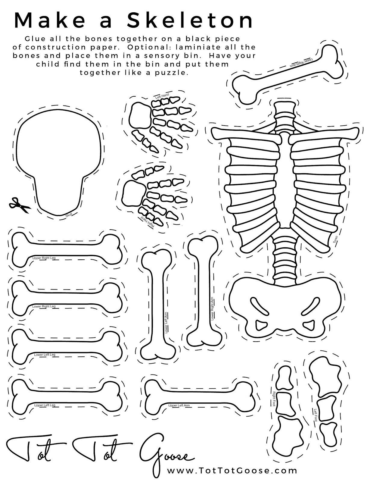 Skeleton Printable, All About Me Theme, Preschool Theme, All About - Printable Skeleton Puzzle