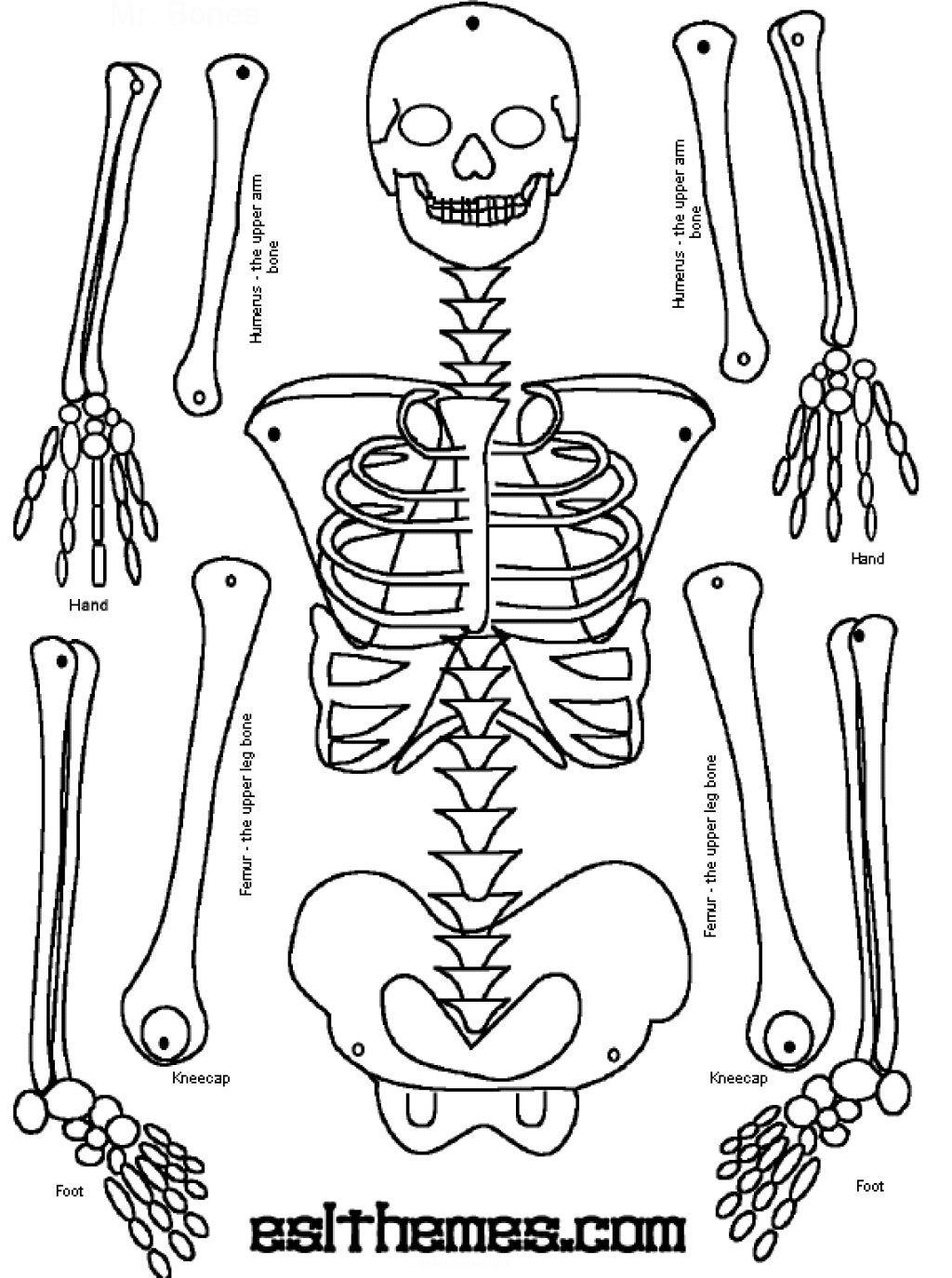 Skeleton Puzzle Printable | Print It | Human Skeleton, Human Body - Printable Skeleton Puzzle