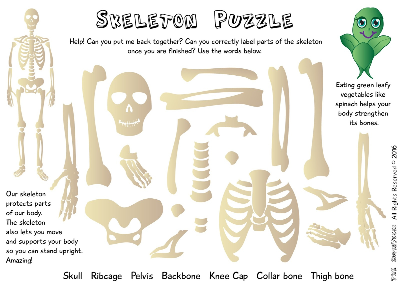 The Superveges - Vitamins And Minerals For A Healthy Body: Free - Printable Skeleton Puzzle